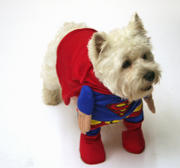 th_480581773_Superdog_by_Louisetheloser2_122_524lo.jpg